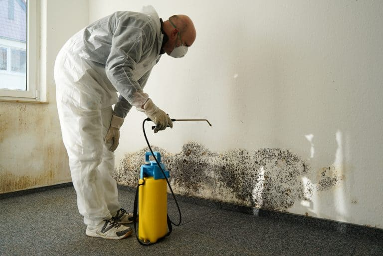 Mold Remediation On Wall